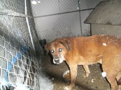 #OHIO #URGENT ~ Jed is a 7-8yo #senior hound mix out in the cold in a rural shelter  - is there a warm heart for him ? He's in need of a loving #adopter / #rescue at ADAMS COUNTY DOG POUND   11260 St Rt. 41   #WestUnion OH 45693 Ph 937-544-2431