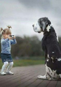 """Visit our site for more info on """"great dane puppies"""". It is an exceptional area to find out more. Dogs And Kids, Big Dogs, Animals For Kids, Animals And Pets, Cute Animals, Great Dane Funny, Great Dane Dogs, I Love Dogs, Cute Dogs"""