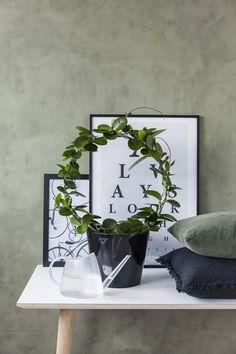 Hoya (voksblomst) Planters, Mirror, Inspiration, Home Decor, Asylum, Homemade Home Decor, Decoration Home, Room Decor, Mirrors