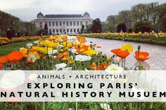 Animals + Architectu
