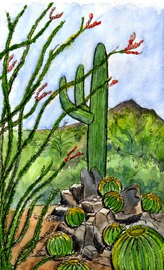 This is a scene from the Desert Botanical Garden, featuring that very special cactus, a Saguaro. Description from badlydrawngrrrl.blogspot.com. I searched for this on bing.com/images