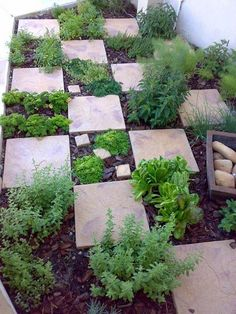 Chessboard paving layout - clever idea to have all the herbs accessible!