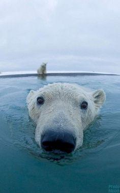 Vamos, ven, que el agua está buenísima.