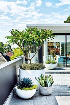 adam robinson garden design / residential garden, leichhardt nsw