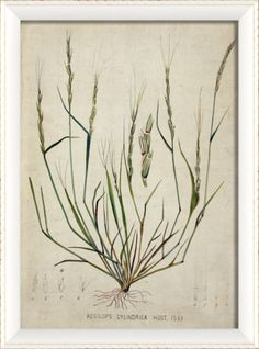 Blueprint Artwork Botanical Framed Art//