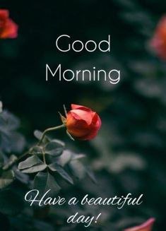 Good morning Photo Today is a New Day , Good morning Pictures Today is a New Day , Good morning Wallpaper Today is a New Day , Good morning Photo Today is a New Day . Good Morning Cards, Good Morning Picture, Good Morning Flowers, Good Morning Love, Good Night Image, Good Morning Messages, Morning Pictures, Good Morning Wishes, Good Morning Images