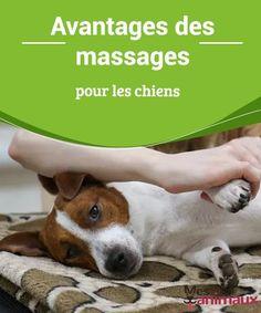 Chien Jack Russel, Jack Russell Terrier, Foods Dogs Can Eat, Massage, Pets Online, Ceux Ci, Cesar Millan, Pet Home, Scottish Terrier