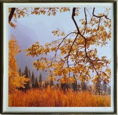 Yosemite Valley in fall, 1982
