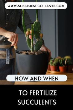 Even novice gardeners know that fertilizer is important to encouraging and maintaining healthy growth in plants, but how does it differ for succulents? Learn how and when to fertilize succulents on this pin! Flowering Succulents, Types Of Succulents, Types Of Plants, Cacti And Succulents, Cactus Plants, Cacti Garden, Succulent Fertilizer, Succulent Planter Diy, Succulent Seeds