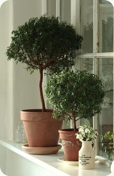 potted trees. Deep window sill.