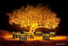 A Greek tavern under the tree in Naxos island, Greece. Like a dream...