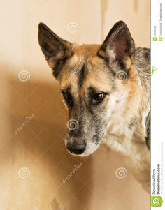 Dog From A Homeless Animals Shelter - Download From Over 66 Million High Quality Stock Photos, Images, Vectors. Sign up for FREE today. Image: 40550099