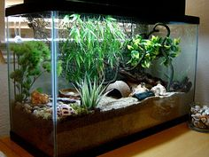 60 Best Hermit Crabs Images Hermit Crab Habitat Hermit Crabs