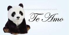 imagenes de pandas tiernos