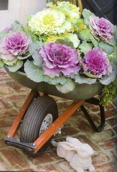 Kale planted in a wheel barrel Lovely.Kale planted in a wheel barrel Flower Cart, Flower Pots, Beautiful Gardens, Beautiful Flowers, Kale Plant, Cabbage Flowers, Wheelbarrow Planter, Ornamental Cabbage, Winter Flowers