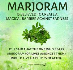 ∆ Enchantments... Marjoram