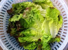 Greens Gone Bad - How to avoid the guilt of the wilt