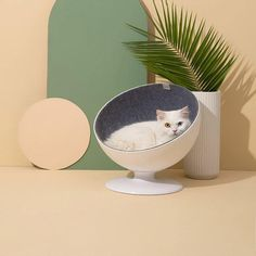 Product Description Cat House on the Kings Here! Classic and unique design, an exclusive cat bed for your Cat Boss, the classic white house cat chair style meets the sleeping habits of the cat, provide a fully enclosed comfortable space 1. EXCLUSIVE DESIGN: An exclusive elevated cat bed is custom made for your CAT BOSS, the classic bowl shape meets the sleeping habits of cat, provide a fully enclosed comfortable space 2. COMFORTABLE & FUN: 360-degree rotation make it cozy and fun, uniform ro Cool Cat Beds, Cool Cats, Modern Cat Furniture, Pet Furniture, Industrial Furniture, Classic Bowls, Order Kitchen, Round Beds, Cat Playground
