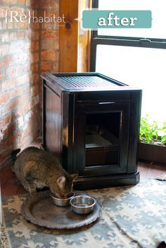 8 cool DIY designs for cat litter box furniture you can make. If you like to make things yourself and want to improve your cat's litter area, check this out