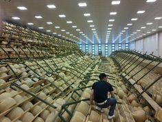 Red een Parmigiano Reggiano - De Italiaanse regio Emilia-Romagna is voor de tweede maal in korte tijd getroffen door een aardbeving. In dit gebied, waar onder meer de befaamde Parmigiano wordt gemaakt, dreigen 550.000 van deze parmezaanse kazen verloren te gaan. Door de aardschokken zijn de kazen beschadigd en is het rijpingsproces onderbroken. De smaak van de kaas is echter onveranderd.