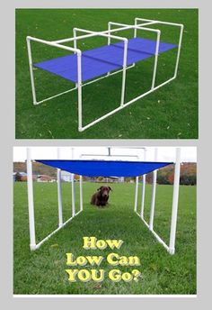 The dog agility crawl tunnel is a unique obstacle that is used in UKC trials. It is also used in training to challenge the dogs to crawl through low places to get to a target location and retrieve something. The height of the fabric roof is adjustable. Agility Training For Dogs, Dog Training Classes, Dog Agility, Dog Training Tips, Training Online, Training Quotes, Training Schedule, Portable Dog Kennels, Dog Enrichment