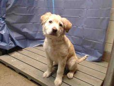OCFL.NET  Please adopt  6 month puppy