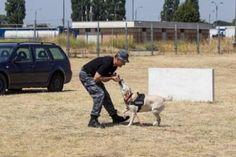 Un patruped din rasa Labrador l-a lăsat pe un şofer fără ţigările de contrabandă dar şi fără maşină. Autoturismul, marca Opel Vectra, înmatriculat în Bulgaria, a vrut să intre în ţară prin vama Giurgiuleşti Galaţi Rutier.