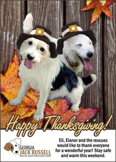 It's Thanksgiving weekend, and we at rescue have so much to be thankful for this year. Like every year before it–and any year in dog rescue, to be quite honest—it has been both a fulfilling and a challenging one. We'll start recapping 2015 soon enough, though, in separate blog entries. For now?
