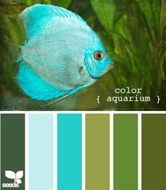 Design Seeds, for all who love color. Apple Yarns uses Design Seeds for color inspiration for knitting and crochet projects. Colour Pallette, Colour Schemes, Color Combos, Color Patterns, Design Seeds, Wow Art, Colour Board, Color Stories, Color Swatches