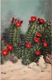 Vintage Southwest Postcard -- White Sands Cactus in Bloom ~~~ The VintagePlum Shop on Etsy ~~~ Colorado Landscaping, Birthday Postcards, Plant Guide, Wedding Signage, Landscaping Plants, Native Plants, Botanical Prints, Vintage Postcards, Cactus