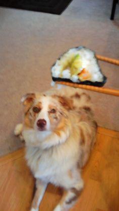 Sage loves sushi!