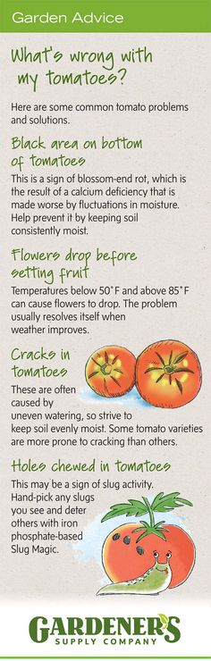 Troubleshooting Tomato Problems, Tomato Pests | Gardener's Supply Growing Tomatoes In Containers, Growing Vegetables, Grow Tomatoes, Baby Tomatoes, Gardening Vegetables, Cherry Tomatoes, Tomato Trellis, Tomato Garden, Tomato Seedlings