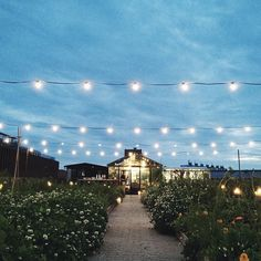 We sat in that greenhouse and dined #oakmidsummer #oakthenordicjournal #brostecph