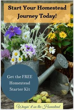 Our Homestead Starter Kit has everything you need to get started to make your homestead dreams a reality.  These resources are designed to help you organize and plan your future homestead, sign up for free access today! Gardening For Beginners, Gardening Tips, Flower Gardening, Indoor Gardening, Vegetable Gardening, Fruit Bushes, Fruit Trees, Types Of Herbs, Types Of Plants
