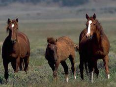 Razas de caballos salvajes