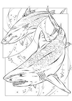 Dessin de deux requins tigres effrayants à colorier.