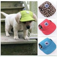 Adorable Summer Dog Hat - FREE - Just pay Shipping! Available in 10 Color/Styles Cute Puppies, Cute Dogs, Dogs And Puppies, Yorkie Puppies, Funny Dogs, Diy Pour Chien, Summer Dog, Summer Hats, Summer Beach