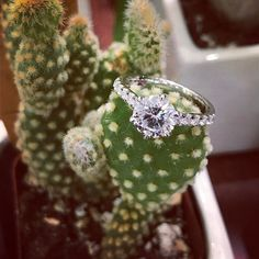 When cactus meets diamond, it simply means forever love. #cactus #diamond #thediamondguys #engagementring #love