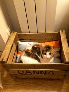 Con una caja de fruta, una cama para mi gata!!!!