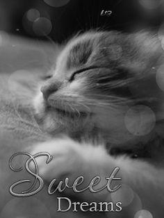 gif, sweet dreams