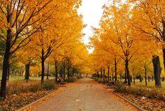 Et l'automne, c'est encore pire. | 36 raisons de ne surtout pas aller à Montréal