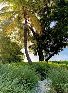 Our garden is a large part of Calabash. Here you will not only find balance and tranquillity but there is also a lot to discover. Jermaine is a great guide and will give you a great tour. Caribbean, Beach House, Most Beautiful, Tours, Island, Garden, Plants, Beach Homes, Garten