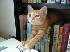 Nothinglikeit - Because most things are funnier when you flatten them!: Library Cats