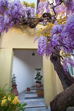 Sarzana, Liguria, Italy