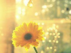 Imagen de flower and yellow