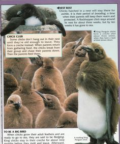 Penguin Facts | Penguin Place Penguin Facts, King Penguin, Customer Service, Penguins, Science, Animals, Animales, Animaux, Customer Support