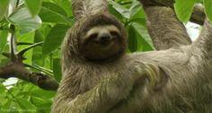 sloth GIF
