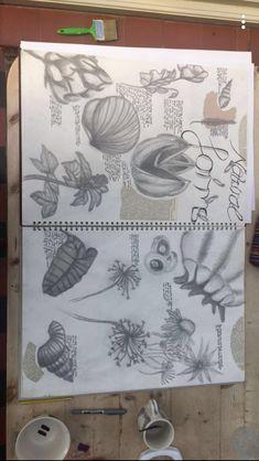 Gcse Art Sketchbook, Sketchbook Ideas, Sketchbook Inspiration, Art Analysis, Karl Blossfeldt, Natural Form Art, Aquarium Ideas, Sketch Books, A Level Art