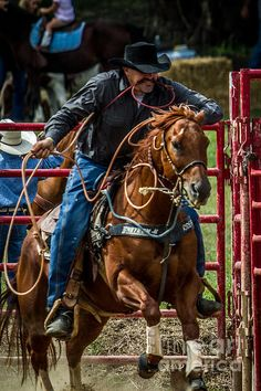 A calf roper and his horse come out of the chute during a calf roping competition in Wantage, NJ Cowboy Horse, Cowboy Up, Cowboy And Cowgirl, Cute Country Couples, Cute N Country, Country Boys, Country Life, Big Horses, Pretty Horses