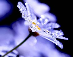 Beautiful Examples of DEW DROPs